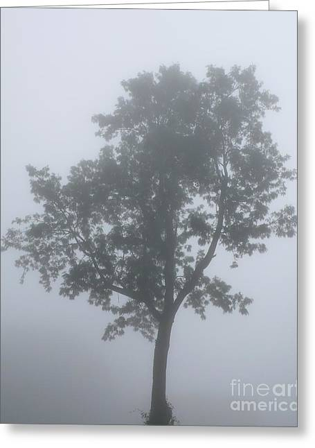 Silent Mist Greeting Card by Gregory Smith