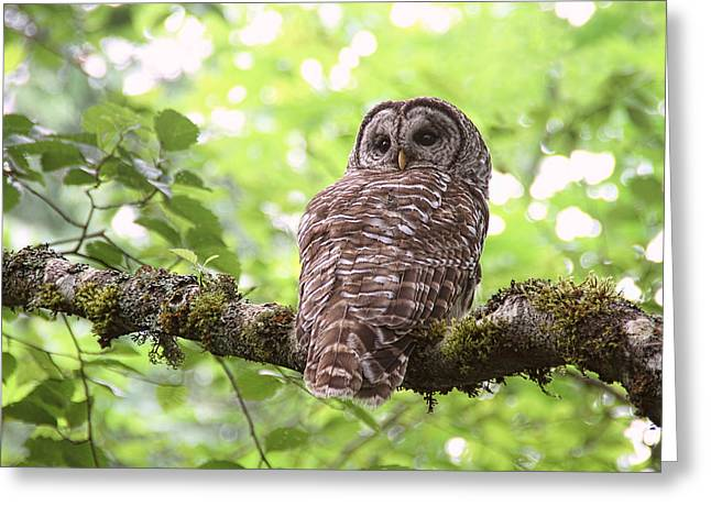 Silent Watcher Of The Woods Greeting Card