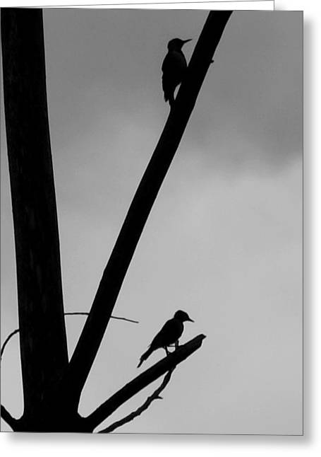 Silhouette 1 Greeting Card by Joe Faherty