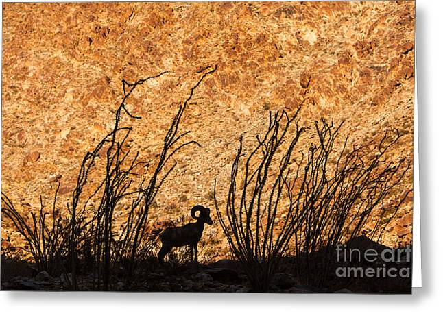 Greeting Card featuring the photograph Silhouette Bighorn Sheep by John Wadleigh