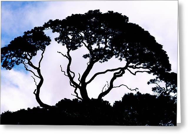 Greeting Card featuring the photograph Silhouette by Jim Thompson
