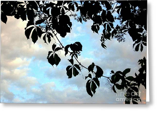 Silhouette Greeting Card by Kathy Bassett