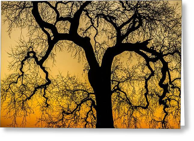 Silhouette Oak Greeting Card