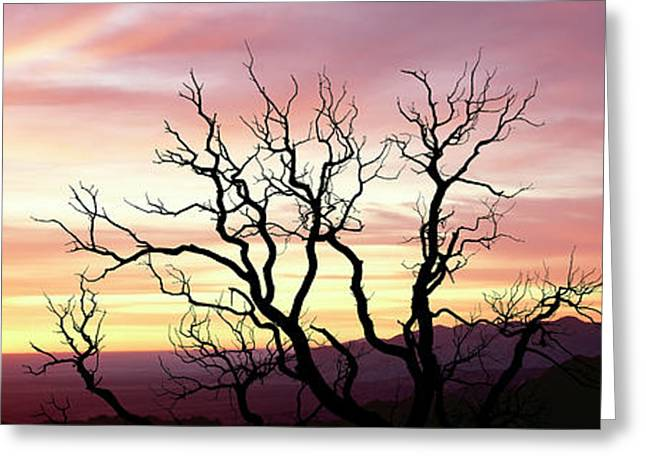 Silhouette Of A Bare Tree At Sunrise Greeting Card by Panoramic Images