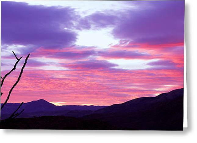 Silhouette Of A Bare Tree At Sunset Greeting Card by Panoramic Images