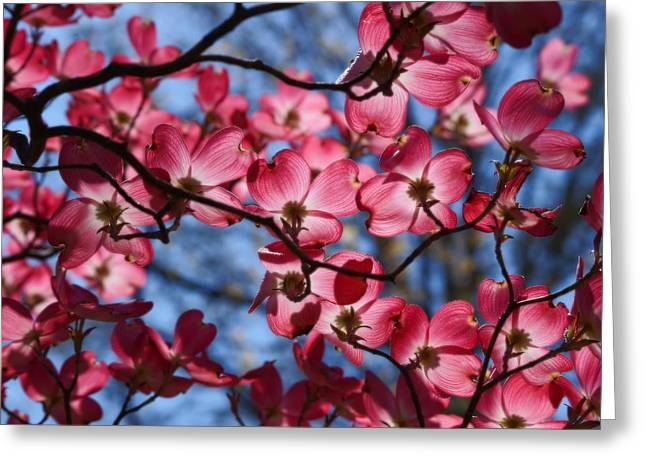 Silhouette Of A Dogwood Greeting Card by Karen Ray
