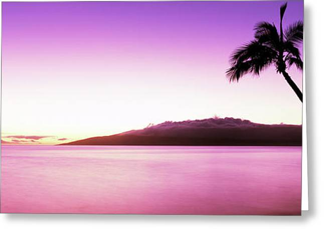 Silhouette Of A Palm Tree, Maui Greeting Card