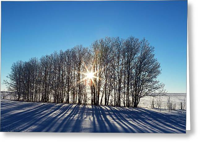 Silhouette Of A Row Of Trees In A Snow Greeting Card