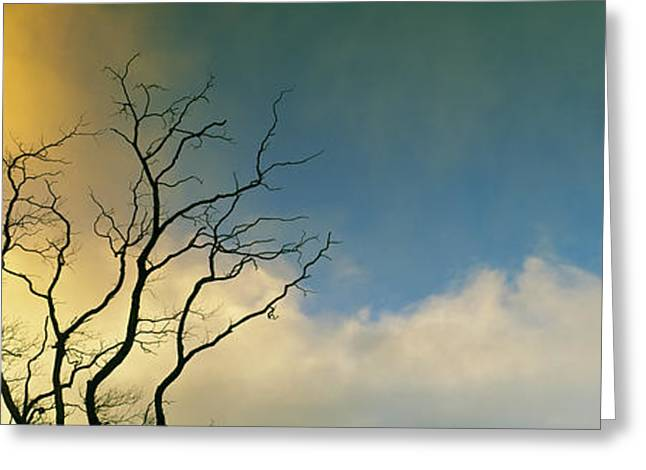 Silhouette Of A Solitary Bare Tree Greeting Card by Panoramic Images