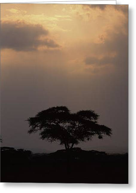 Silhouette Of An Acacia Tree, Serengeti Greeting Card by Panoramic Images