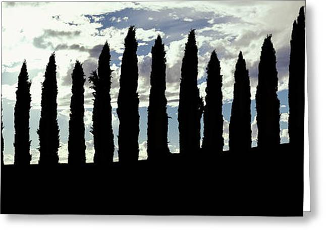Silhouette Of Cypress Trees Greeting Card