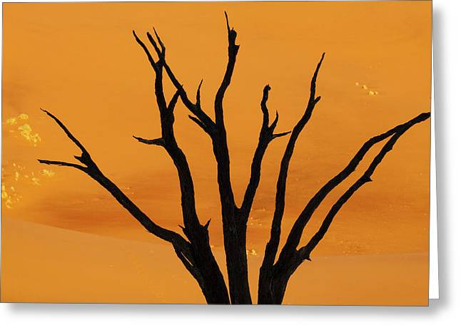 Silhouette Of Dead Tree Against Sand Greeting Card by Jaynes Gallery