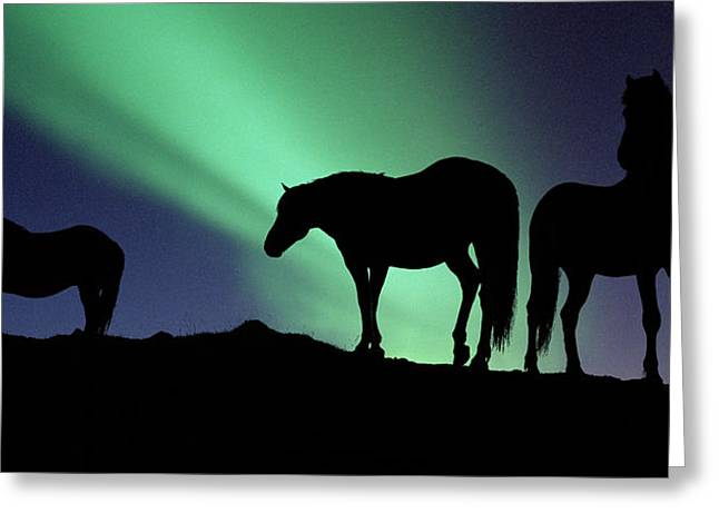 Silhouette Of Horses At Dusk, Iceland Greeting Card