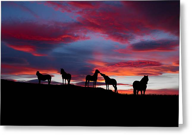 Silhouette Of Horses At Night, Iceland Greeting Card by Panoramic Images