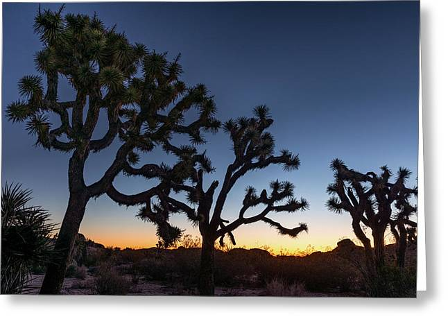 Silhouette Of Joshua Trees, Joshua Tree Greeting Card