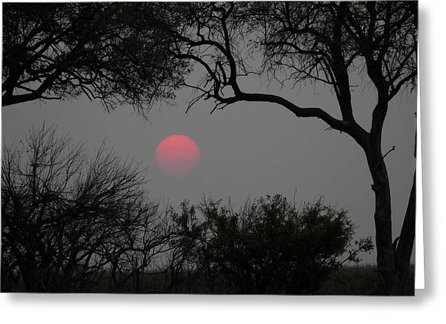 Silhouette Of Leadwood Trees At Dusk Greeting Card by Panoramic Images