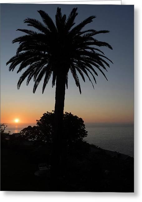 Silhouette Of Palm Tree, Bantry Bay Greeting Card
