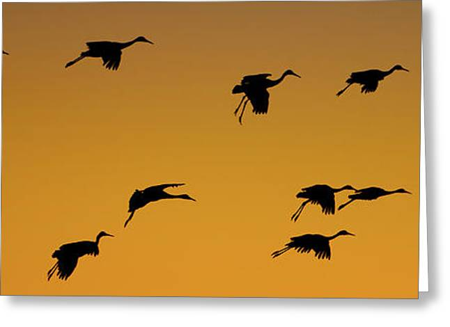 Silhouette Of Sandhill Cranes Grus Greeting Card
