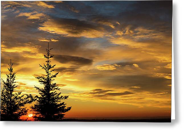Silhouette Of Two Evergreen Trees Greeting Card by Michael Interisano