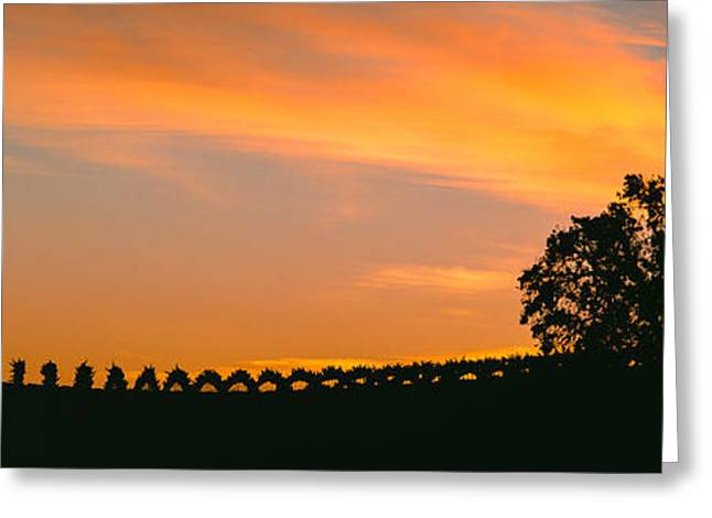 Silhouette Of Vineyard At Sunset, Paso Greeting Card