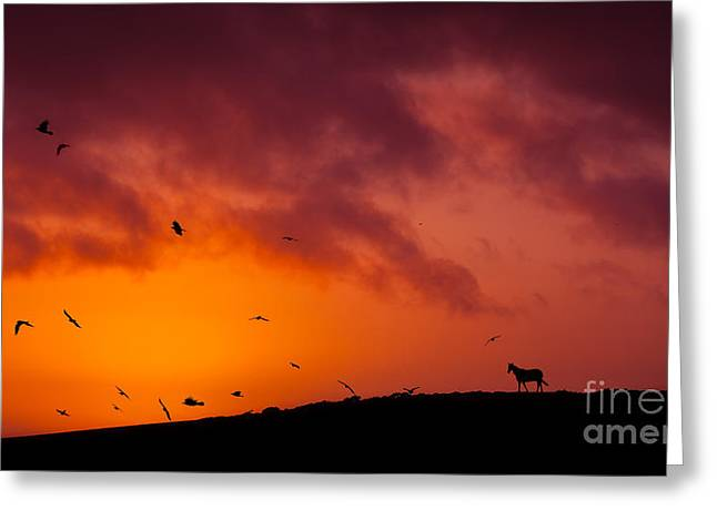Silhouette Greeting Card by Silvio Schoisswohl