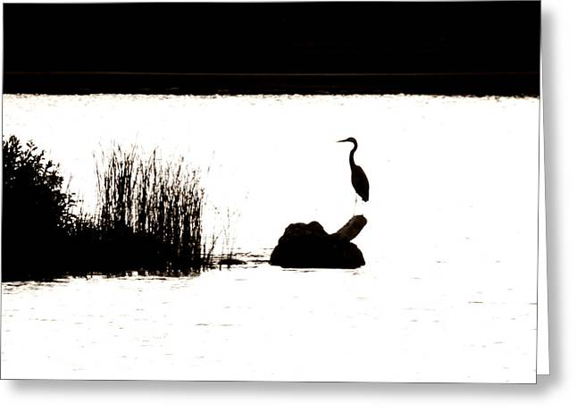 Greeting Card featuring the photograph Silhouette by Zinvolle Art