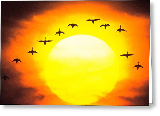 Silhouetted Birds In Sunset Greeting Card by Panoramic Images