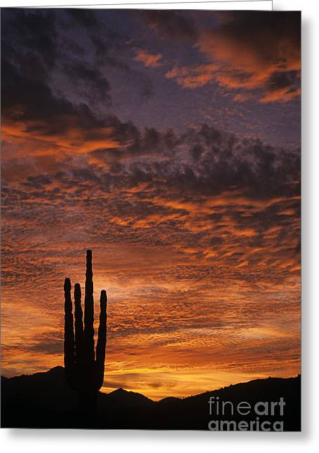 Silhouetted Saguaro Cactus Sunset At Dusk With Dramatic Clouds Greeting Card