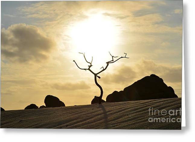 Silhouetted Tree At Dawn In Aruba Greeting Card