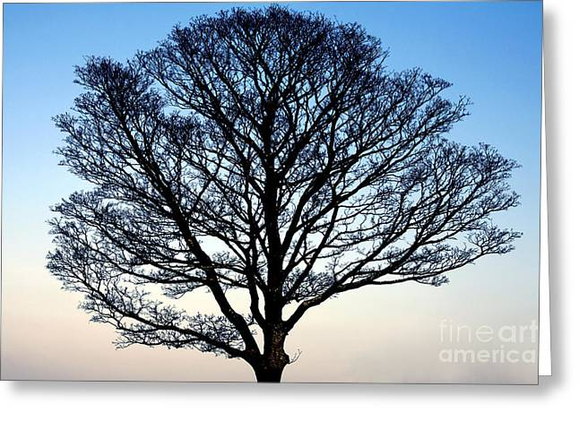 Silhouetted Tree Greeting Card