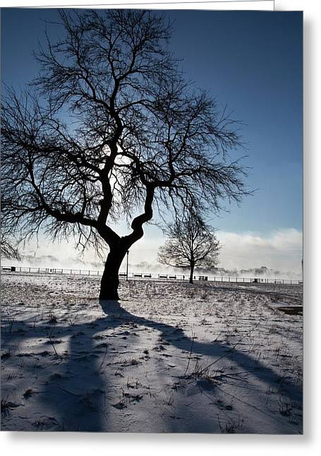 Silhouetted Tree In Winter Greeting Card by Jim West