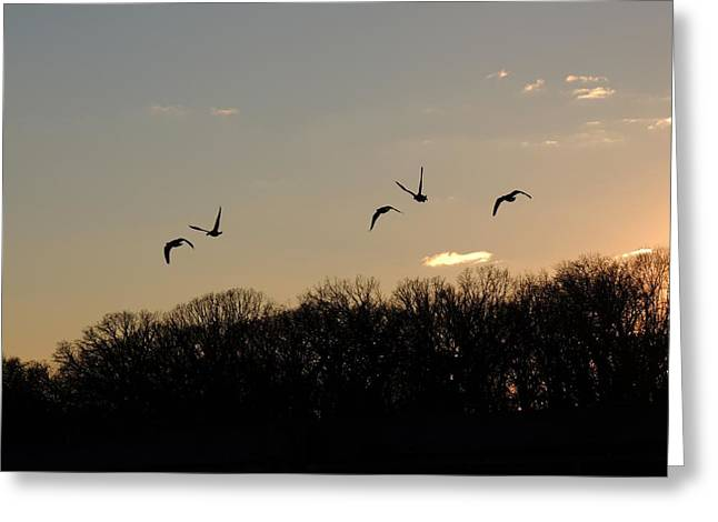 Silhouettes At Dusk Greeting Card