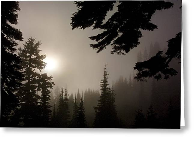 Silhouettes Of Trees On Mt Rainier Greeting Card