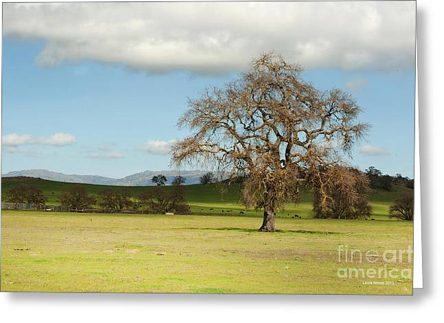 Silicon Valley Hills Greeting Card by Artist and Photographer Laura Wrede