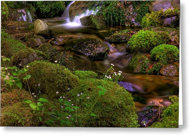 Silky Cascades Greeting Card by John Absher