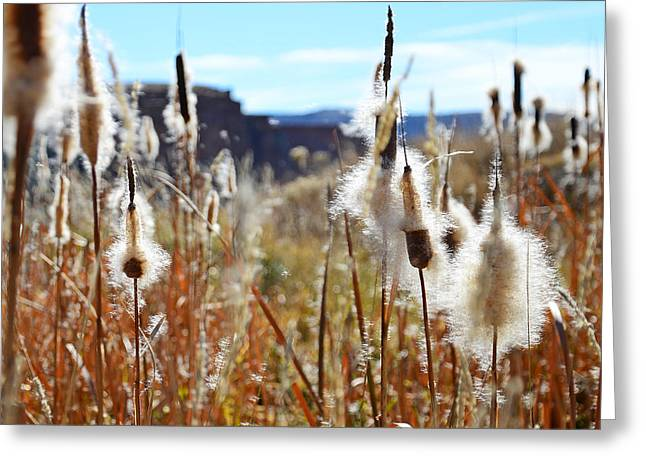 Silky Cat's Tails Greeting Card
