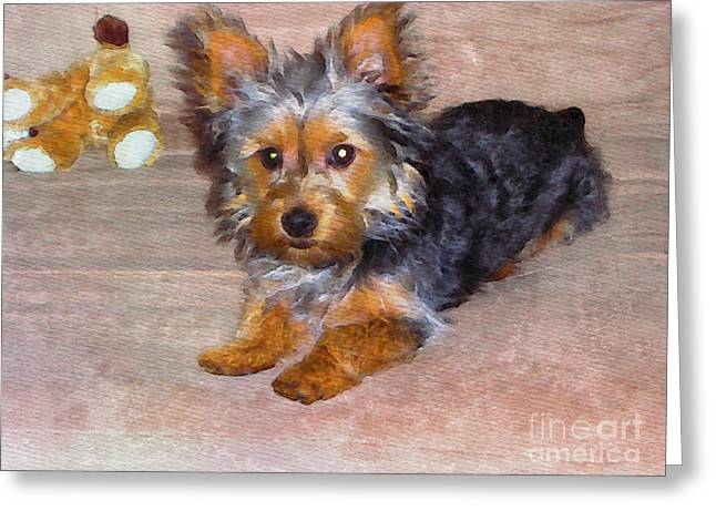 Silky Terrier - Watercolor Greeting Card by Scott Hervieux