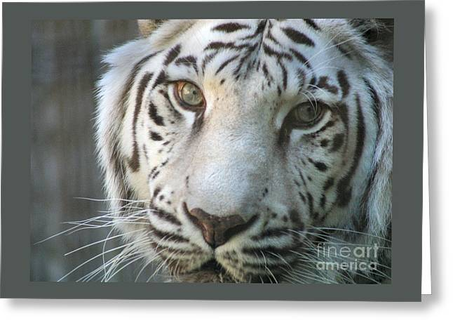 Silver 7703 Greeting Card by Gary Gingrich Galleries