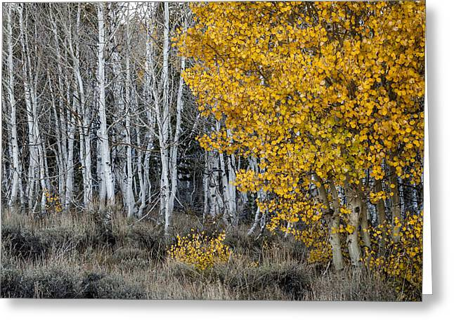 Silver And Gold Greeting Card by Cat Connor