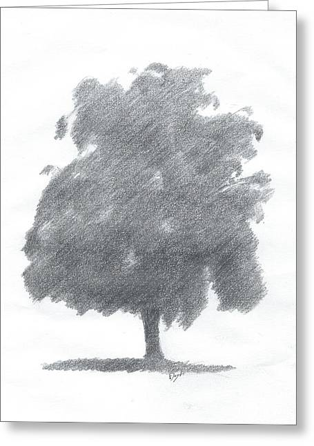 Silver Birch Drawing Number Two Greeting Card by Alan Daysh