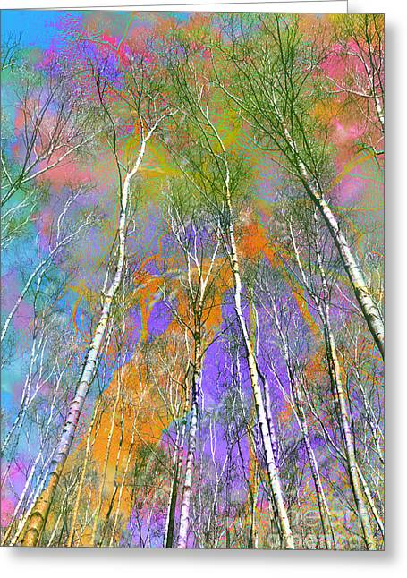 Silver Birch Greeting Card by Michelle Orai