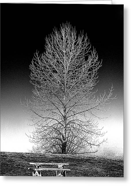 Silver Birch Greeting Card by Phil Dyer