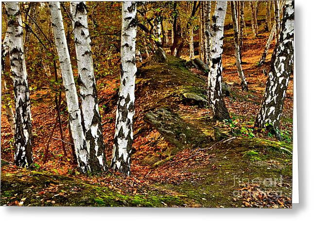 Silver Birch Tree Canvas Greeting Card