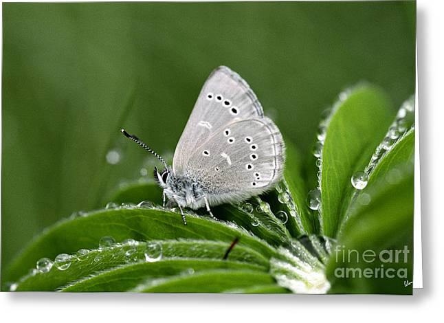 Silver Butterfly Greeting Card