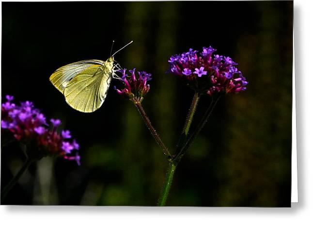 Silver Butterfly Purple Flower Greeting Card