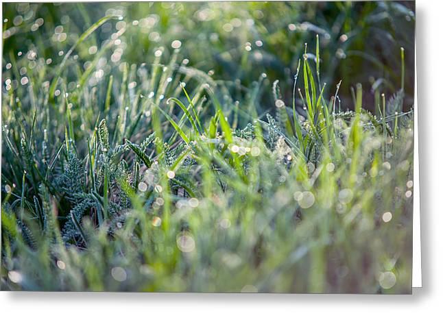 Silver Grass 2. Small Natural Wonders Greeting Card