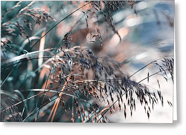 Silver Grass After Rain. Nature In Alien Skin Greeting Card by Jenny Rainbow