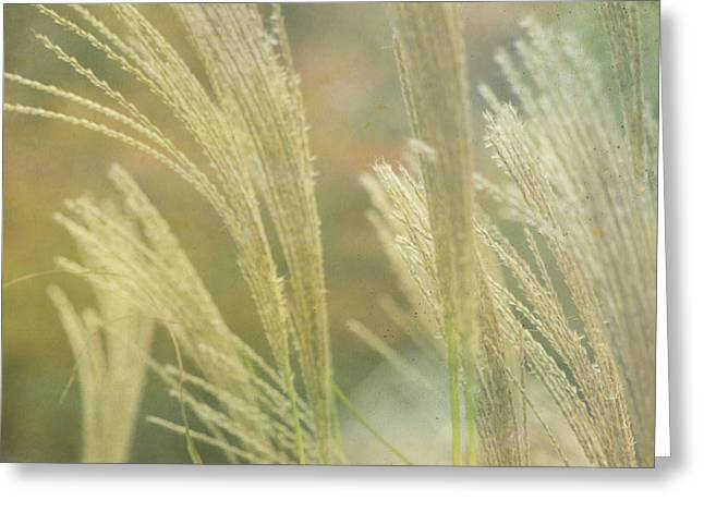 Silver Grass Greeting Card