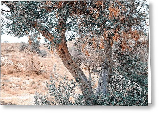 Silver Olive Trees. Nature In Alien Skin Greeting Card by Jenny Rainbow