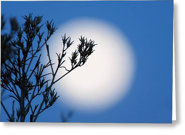 Greeting Card featuring the photograph Silver Sage by Jim Garrison